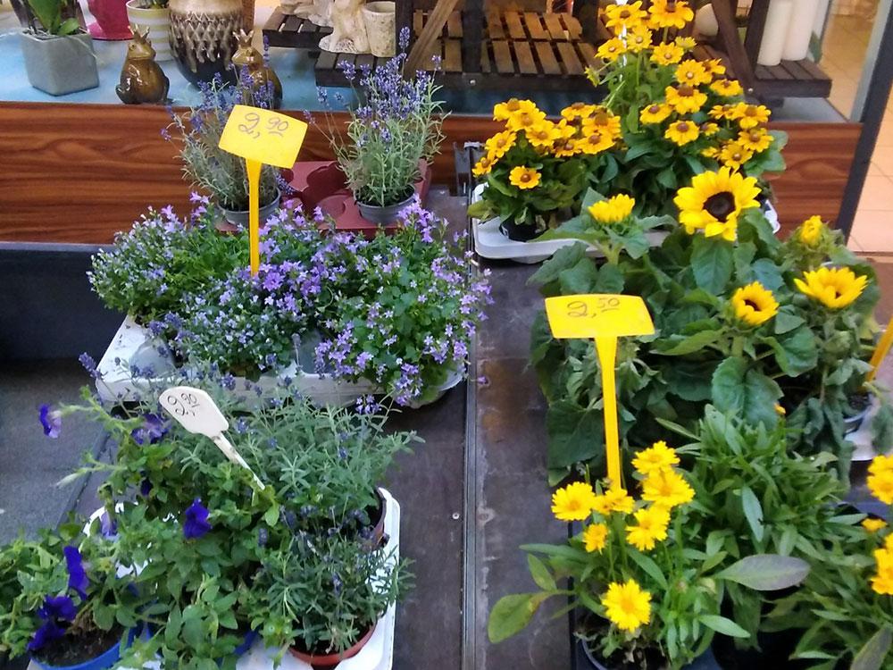 Toms Blumenhütte - Ihr Blumenladen in Berlin-Zehlendorf